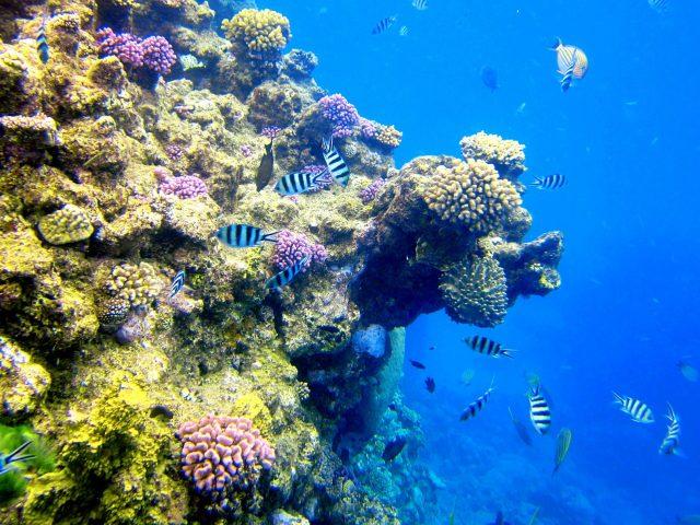 Большой барьерный риф - рыбки
