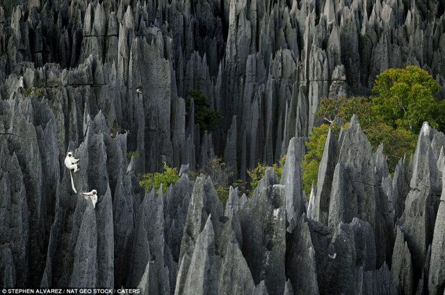 Лемуры в Каменном лесу