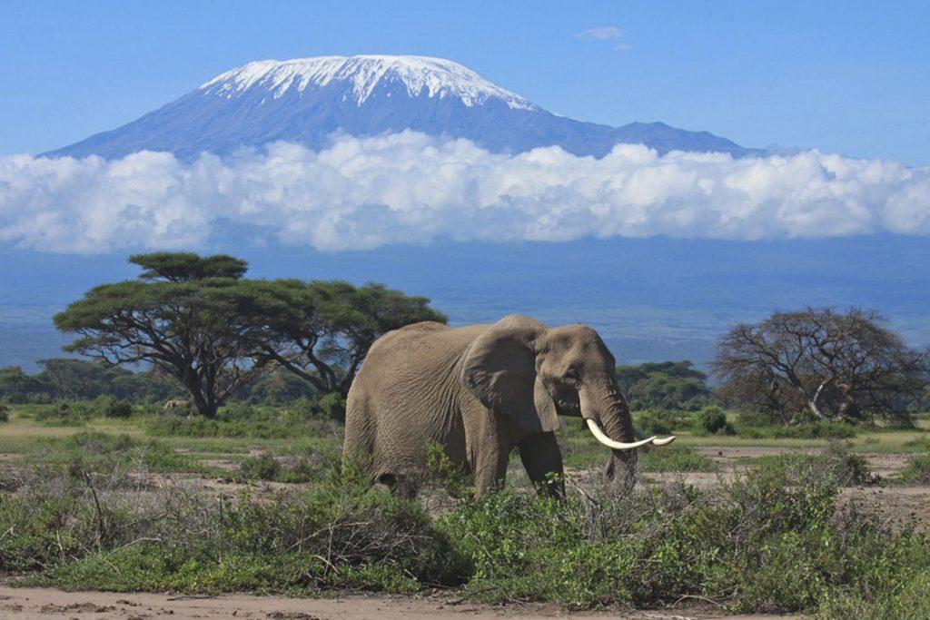 Великолепный вид на гору Килиманджаро