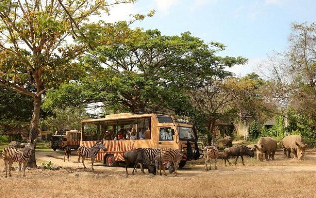 mara-river-safari-lodge-bali4